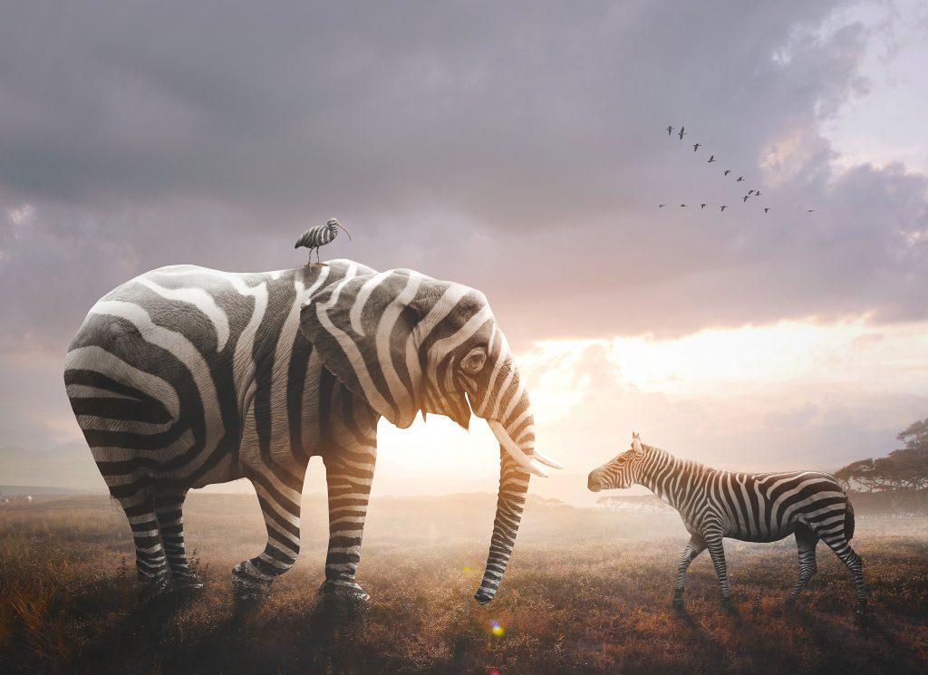 Adulte-Zebre-Haut-Potentiel